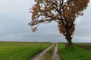 ThurySalen_8_11-27-2012_8