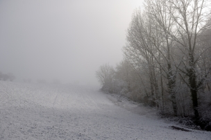 ThurySalen_3_77