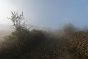 thurysalen_19_15