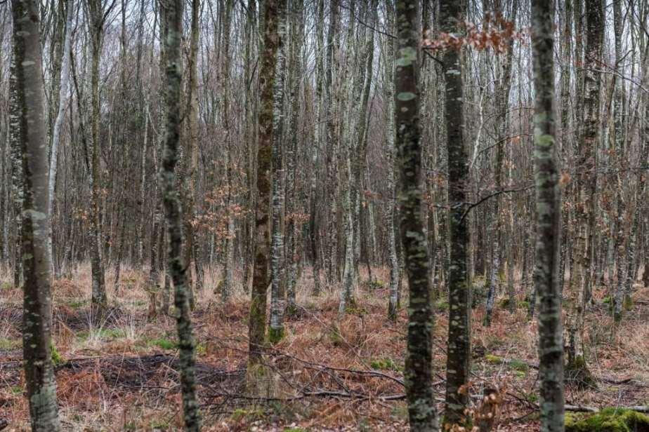 Forêt de Cerisy (hors dessentiers)