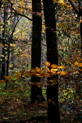 Feuilles automne lumière2_DSCF_5267