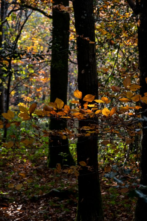 Feuilles automne lumière3_DSCF_5269