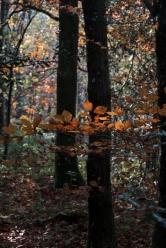Feuilles automne lumière3_DxO
