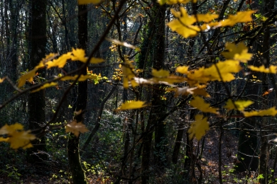 Feuilles automne lumière4_DSCF_5281