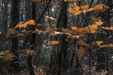 Feuilles automne lumière4_DxO