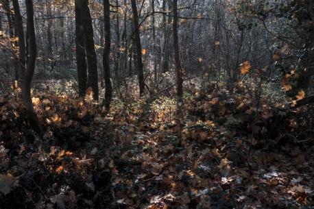 Feuilles automne lumière5_DxO
