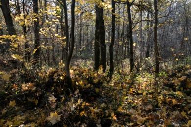 Feuilles automne lumière6_DSCF_5289