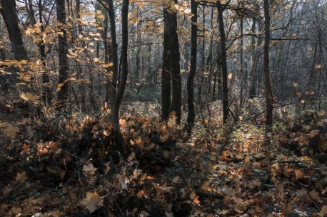 Feuilles automne lumière6bis_DxO