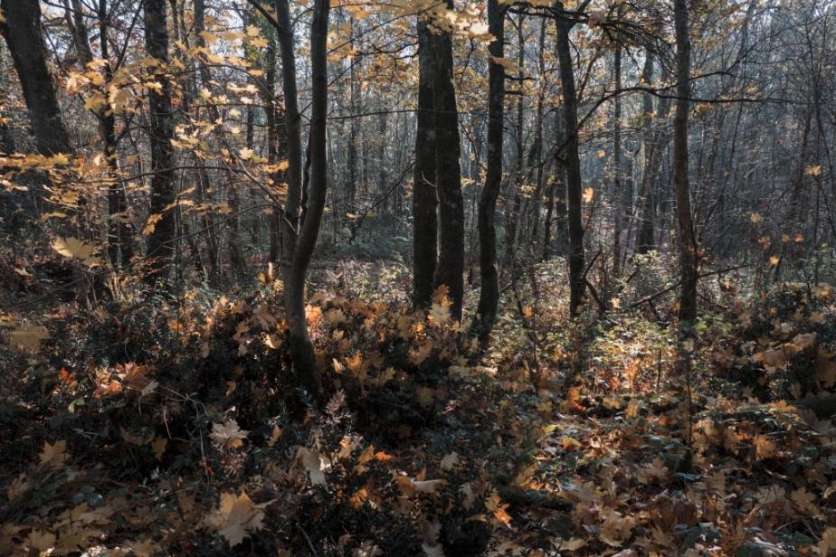 Clichés d'automne (2)