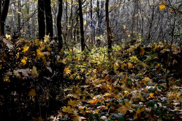 Feuilles automne lumière_DSCF_5288