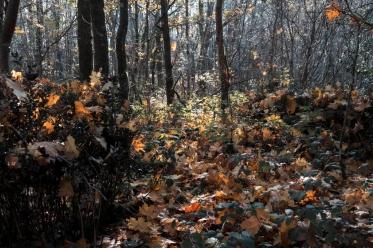 Feuilles automne lumière_DxO