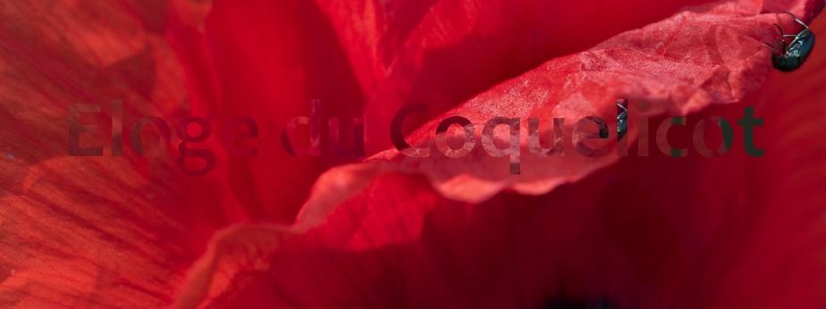Éloge du coquelicot(2)
