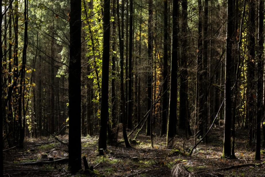 Forêt – automne