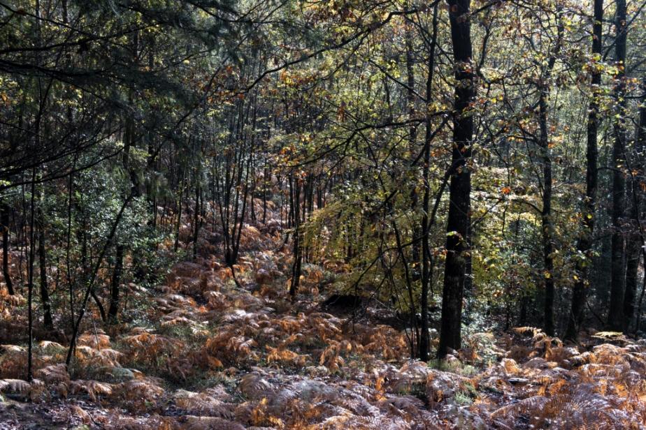 Forêt – Automne(2)