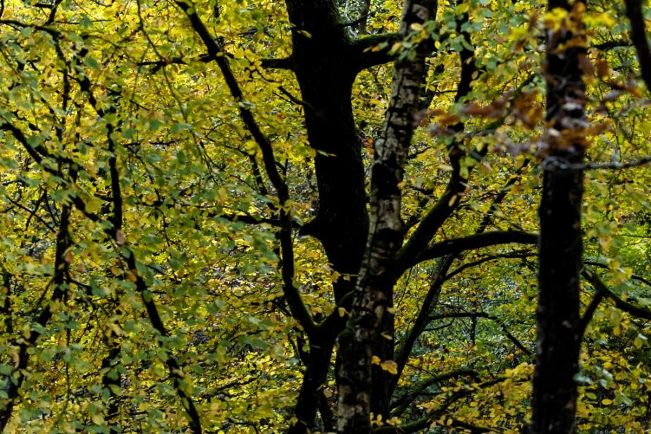 Forêt – Automne (3)Fragments