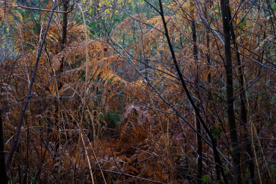 Forêt – Automne(4)