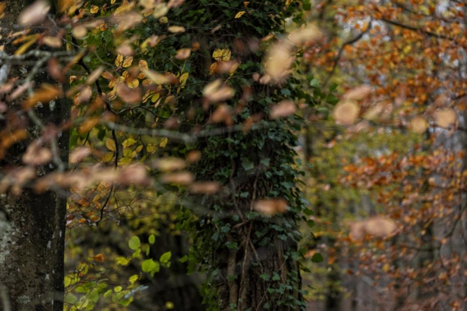 Forêt – Automne(5)
