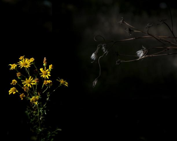 soir_ombre_1_29-07
