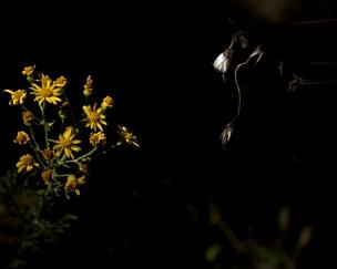 soir_ombre_2_29-07