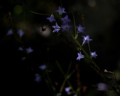 soir_ombre_5_29-07