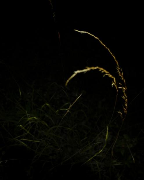 soir_ombre_8_29-07